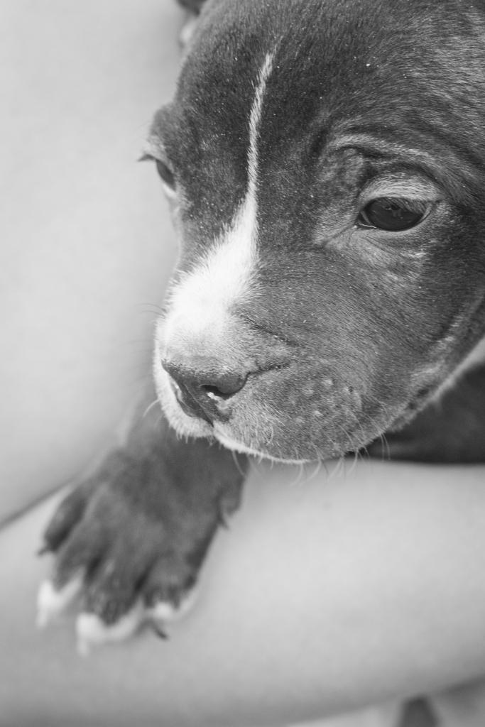 Ruff Patch Puppy